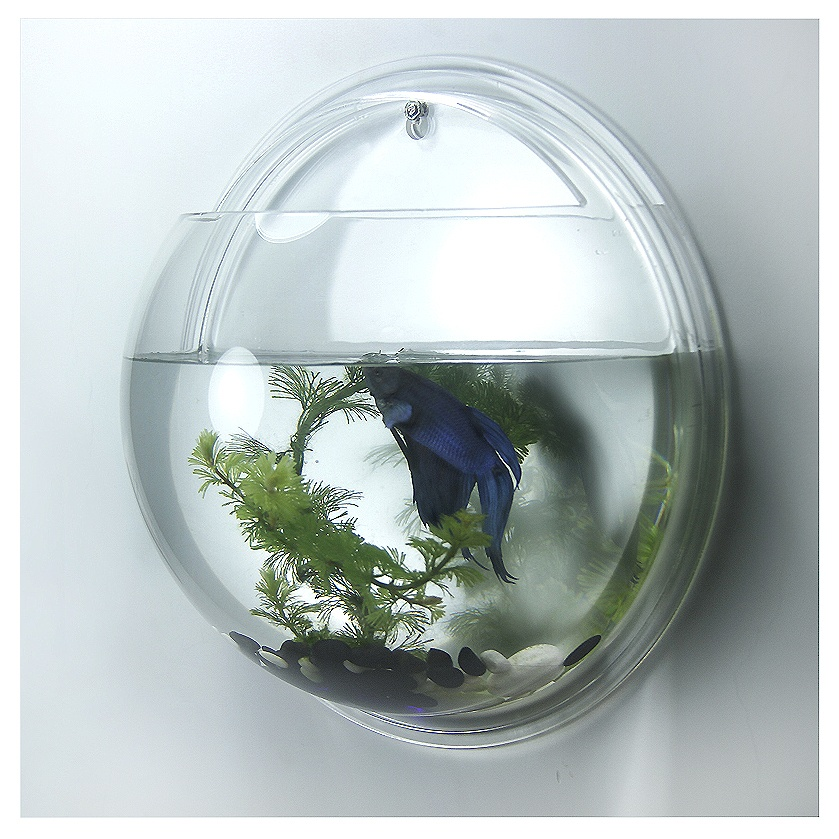 Acrylic wall mounted fish bowl wall hanging fish tank for Fish wall hanging