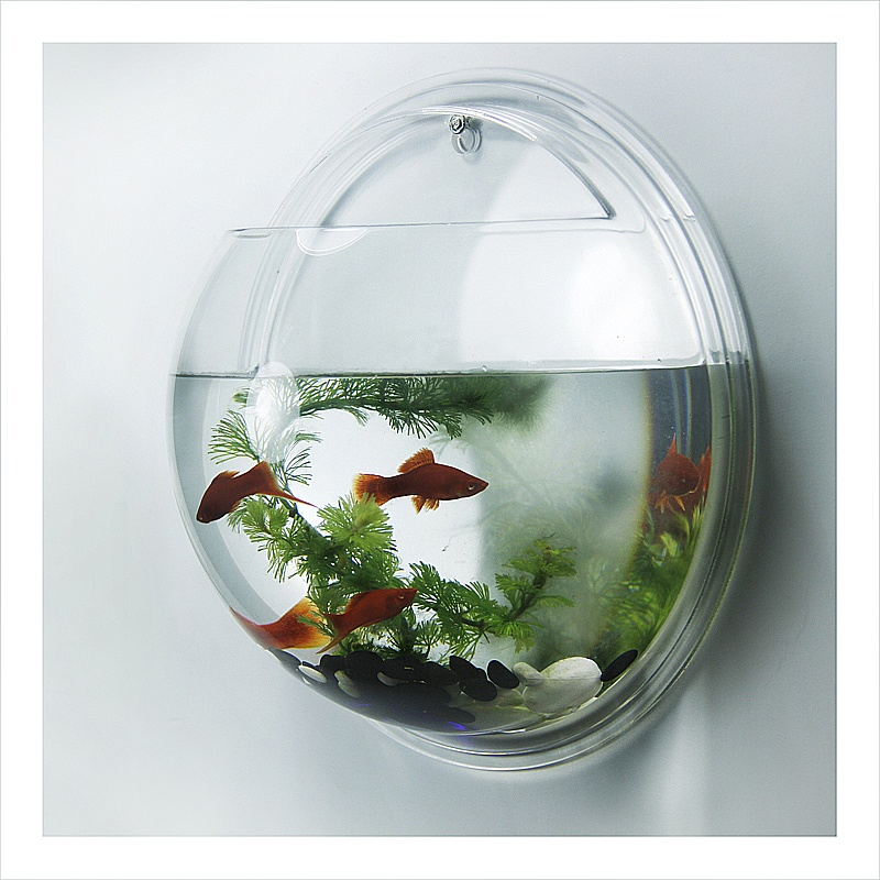 Acrylic wall mounted fish bowl wall hanging fish tank for Acrylic fish bowl