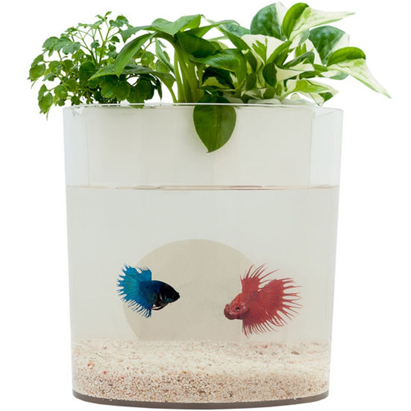 Self cleaning fish tank that also grows food for Fish that clean tanks